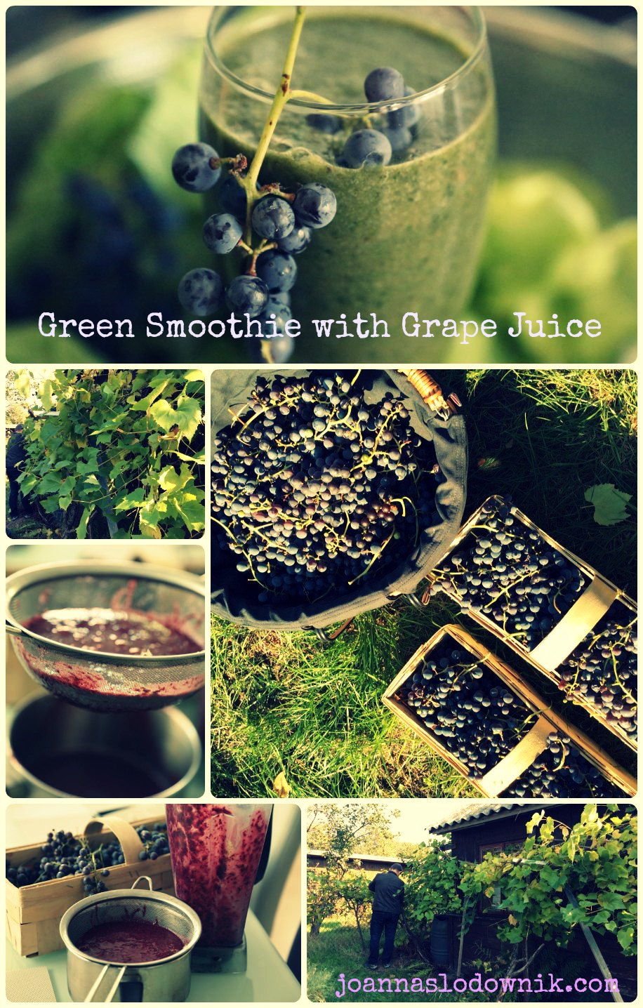 grape-smoothie-growing-grapes01