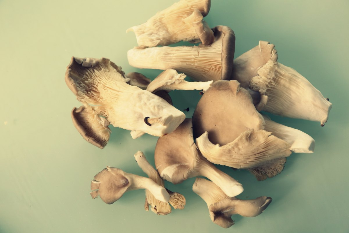 Traditions MUST EVOLVE (or DIE!): Tripe Soup with Oyster Mushrooms Recipe