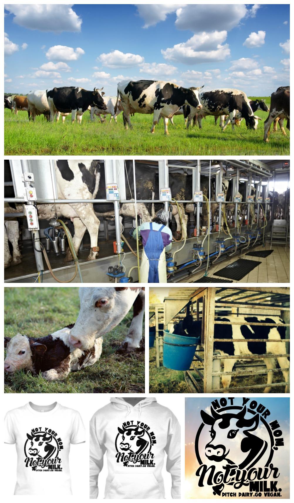 cow-milk01